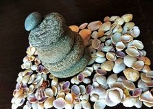 Sea shells and stones. Many sea shells of different shape and size Royalty Free Stock Photography