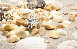 Sea shells and stones Royalty Free Stock Image