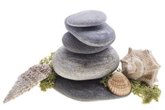 Sea shells on the stones tower Stock Photography