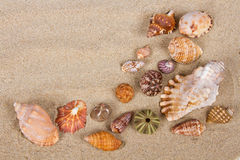 Sea shells in studio Stock Images