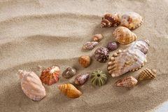 Sea shells in studio Stock Image