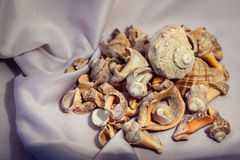 Sea shells for a summer. Background Stock Image
