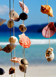 Sea Shells Summer Vacation Leisure Concept Stock Images