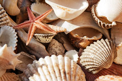 Sea shells. Sea shells, sunny background Royalty Free Stock Images