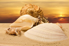 Sea shells at sunset Stock Photography