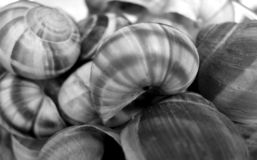 Sea shells surface in black and white