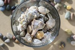 Sea shells in transparent glass bowl, interior decoration on wooden table. Indoors decoration Royalty Free Stock Images