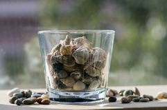 Sea shells in transparent glass bowl, interior decoration on wooden table. Indoor design Stock Photos