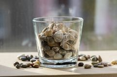 Sea shells in transparent glass bowl, interior decoration on wooden table royalty free stock photo