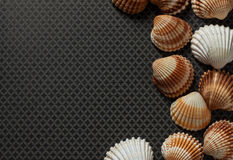Sea Shells and Travel Notes. Large and small sea shells as border on grey ground Royalty Free Stock Photos