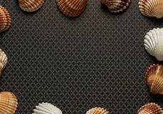 Sea Shells and Travel Notes. Large and small sea shells as border on grey ground Stock Photo