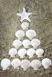 Sea shells in tree shape Stock Image