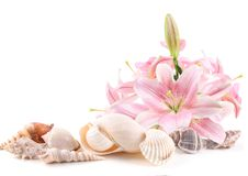 Sea shells and tropical flowers Royalty Free Stock Image