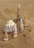 Sea shells upright on a little hill Stock Photo