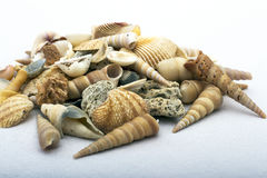 Sea shells of various colors and shapes still-life Stock Photography