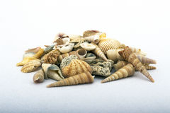 Sea shells of various colors and shapes still-life Royalty Free Stock Image