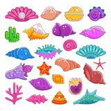 Sea shells vector exotic marine cartoon clam-shell and ocean starfish coralline isolated on white background. Exotic Stock Photos