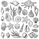 Sea shells vector line set. Black and white doodle illustrations. Collection of various mollusk seashells different forms Stock Photos