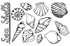 Sea shells vector monochrome isolated line art set Royalty Free Stock Image