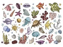 Sea Shells Vector. Set of colorful isolated elements - fish, jellyfish, shells, corals, algae, sea animals, on white background, hand drawing style, vector stock illustration