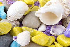 Sea shells, veined Rapa whelk and stones Royalty Free Stock Images