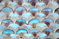 Sea shells wall Royalty Free Stock Photo