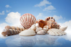 Sea shells in water against blue sky Royalty Free Stock Photography