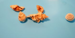 Sea shells in the water with blue background royalty free stock image
