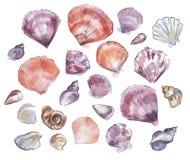 Sea shells watercolor drawing. royalty free stock image