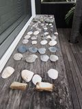 Sea Shells on Weathered Wood Stock Image