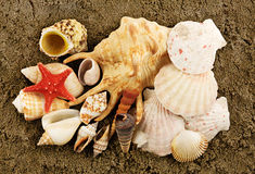 Sea shells and wet sand. Starfish and shells on the wet sand Stock Photography