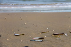Sea shells on wet sand. Summer North sea. Zandvoort, the Nethe Royalty Free Stock Photography