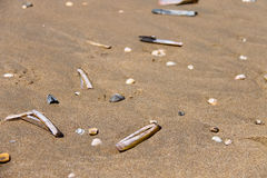 Sea shells on wet sand. Summer North sea. Zandvoort, the Nethe Stock Photo