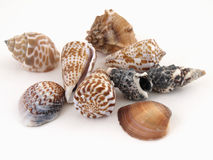 Sea Shells on White Royalty Free Stock Photos