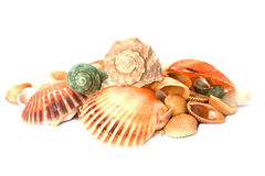 Sea shells on white background Stock Photo