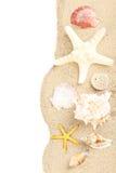 Sea shells Royalty Free Stock Photos