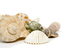 Sea shells on white background Royalty Free Stock Photography