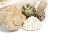 Sea shells on white background Stock Photos