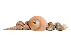 Sea shells on white background Stock Image