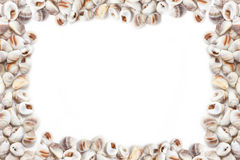 Sea Shells On White Background. Royalty Free Stock Photography
