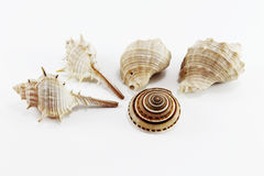 Sea shells on white isolated background Royalty Free Stock Image