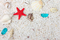 Sea shells with white sand as background. Sea shells with sand as background. Close up Royalty Free Stock Photos