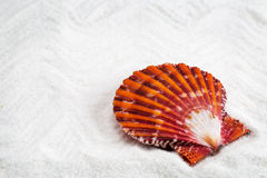 Sea shells with white sand as background Royalty Free Stock Image