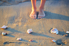 Sea shells and woman legs in the sand on the beach Stock Photography