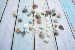 Sea shells. On wooden background Royalty Free Stock Photography