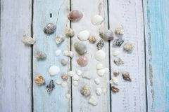 Sea shells. On wooden background Royalty Free Stock Image