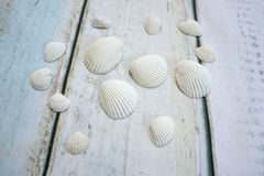 Sea shells. On wooden background Stock Photo