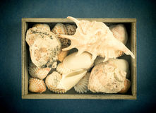 Sea shells in a wooden box on a blue Stock Photos