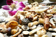 Sea shells. On the wooden table Royalty Free Stock Photo