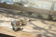 Sea shells on wooden table. With sea background Stock Photography
